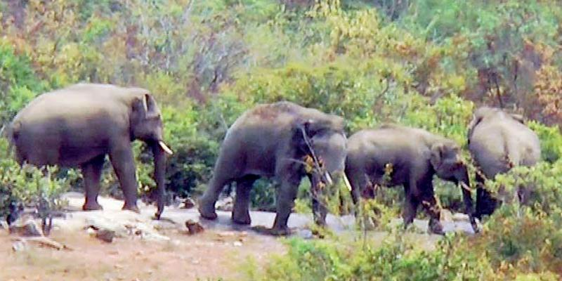 A-Village-People-are-panic-of-Wild-elephant-in-Hosur