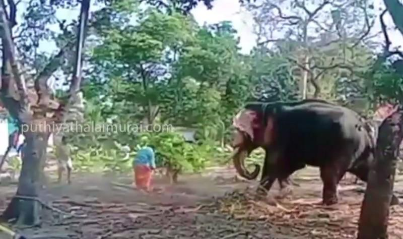 Elephant-attack-man-who-try-to-take-selfie-with-elephant