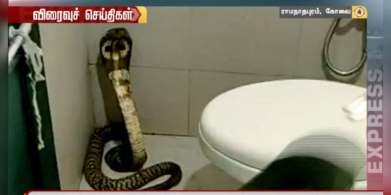 Poison-Snake-caught-in-Bathroom-in-Covai