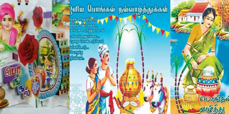 Special-article-about-Pongal-cards