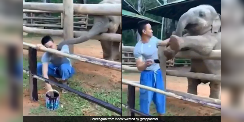 Playful-Baby-Elephant-Demands-Keeper-s-Attention-In-Delightful-Video