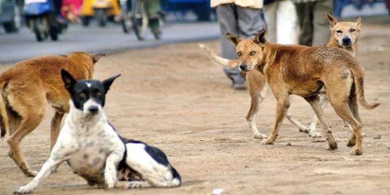 About-800-people-a-month-treated-with-rabies-in-tirunelveli