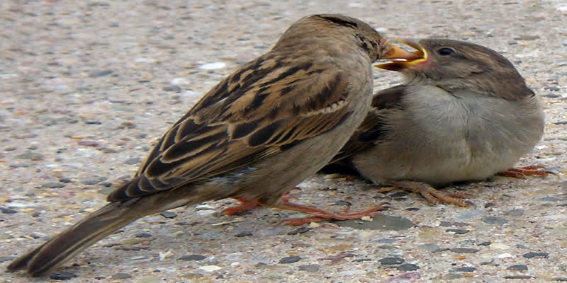 Today-world-sparrow-day