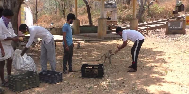 youths-help-to-monkeys-in-theerthamalai