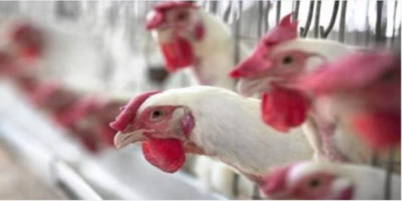 tamilnadu-government-press-release-about-broiler-chicken-and-egg