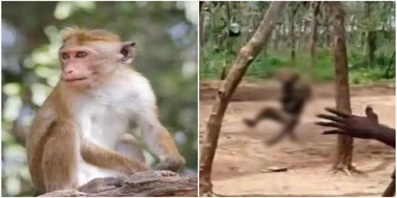 Monkey-hanged-from-tree-as-locals-cheer-in-Khammam