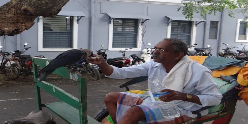 Rickshaw-Puller-Crow-Friendship-story-Puducherry