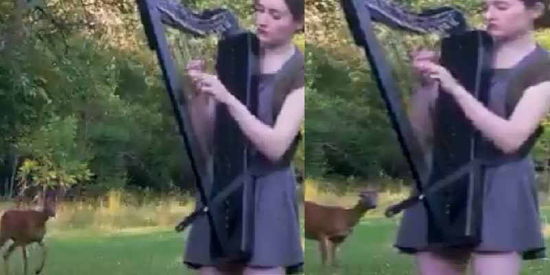Woman---s-harp-session-is-graced-by-an-unlikely-guest--Watch-magical-clip