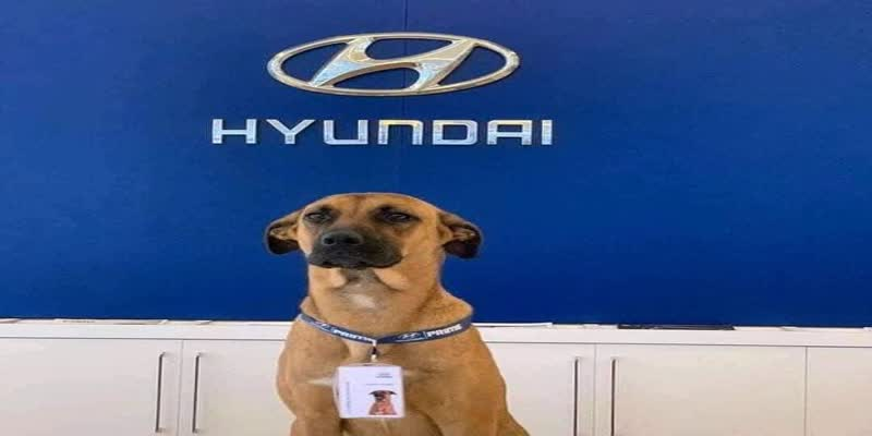 Hyundai-Showroom-Adopts-Street-Dog--Makes-Him-Car-Salesman