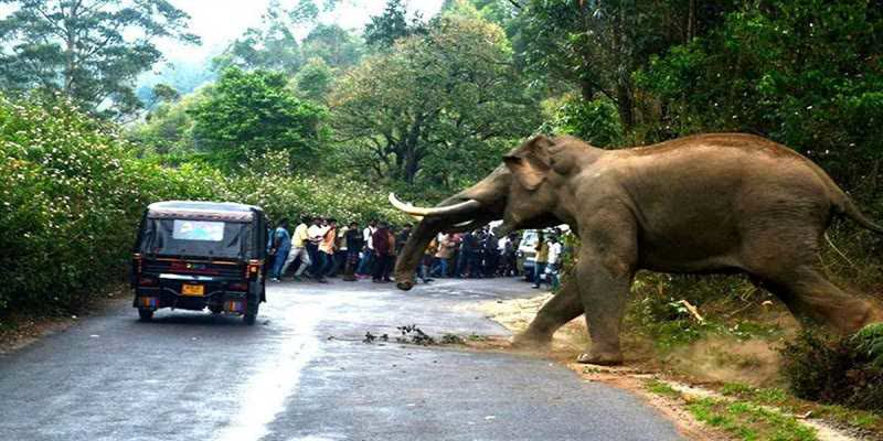 The-Green-Tribunal-has-directed-the-Tamil-Nadu-Forest-Department-to-file-a-report-on-the-steps-taken-to-deal-with-elephant-human-conflicts