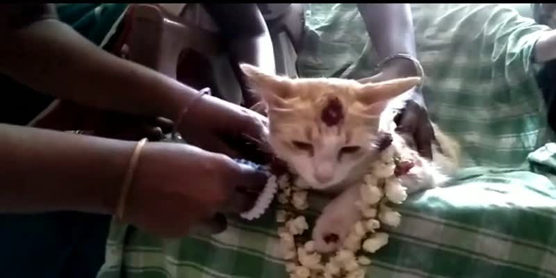Baby-shower-ceremony-for-cat-in-puducherry